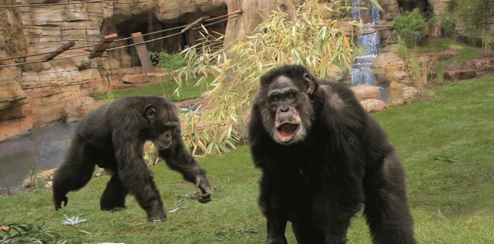 Erlebnis Zoo Hannover 26131