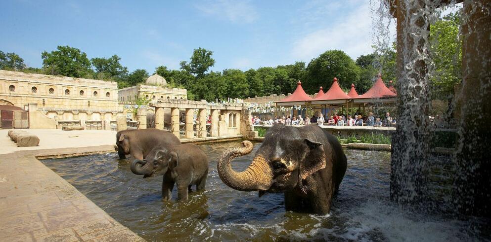 Erlebnis Zoo Hannover 26132