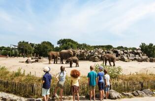 Städtereise mit tierischen Erlebnissen in den schönen Niederlanden