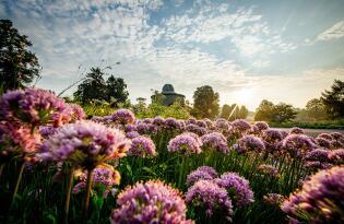 Ab ins Grüne: Erleben Sie einen blühenden Sommer bei der BUGA in Erfurt!