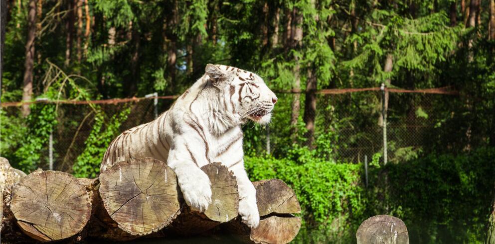 serengeti-park-3
