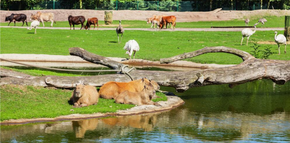 serengeti-park-6