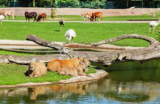 Safari trifft Freizeitpark: Das Familienabenteuer in Niedersachsen