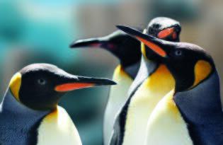 Freuen Sie sich auf einen fantastischen Familientag in Hamburgs schönem Tierpark