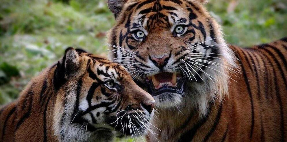 Königlicher Burgers' Zoo 98639