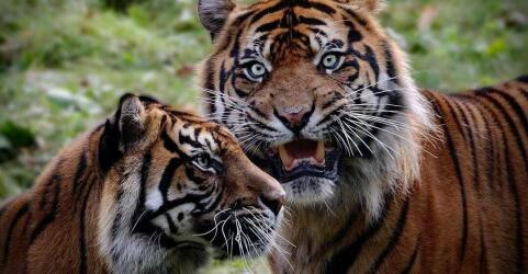 Königlicher Burgers' Zoo